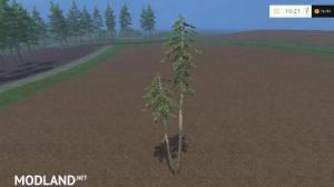PINE TREES WITH MARKS V0.4, 2 photo