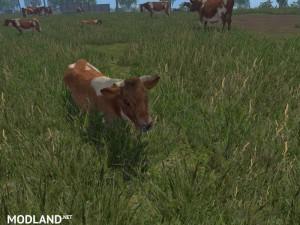 MODELS COWS  v 1.0 , 13 photo