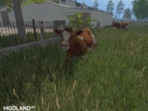 MODELS COWS  v 1.0 , 7 photo