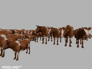MODELS COWS  v 3.0 , 19 photo