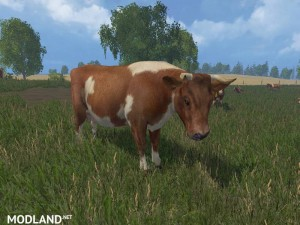 MODELS COWS  v 3.0 , 26 photo