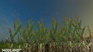 Reale 4k Corn Textures v 1.0