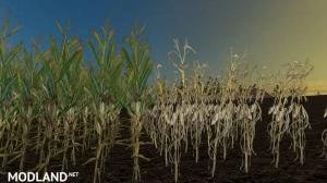 Reale 4k Corn Textures v 1.0, 3 photo