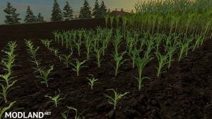 Reale 4k Corn Textures v 1.0, 2 photo