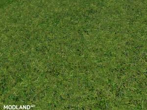 New grass texture v 5.0, 4 photo