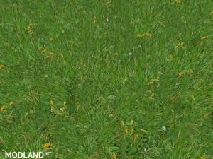 New grass texture v 5.0, 6 photo
