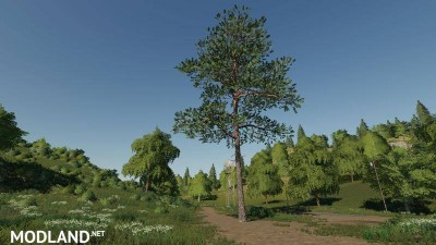 Pine can be placed v 1.0
