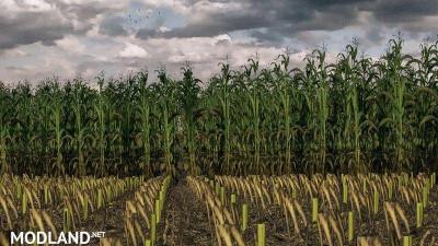 Maize Texture v 1.0, 1 photo
