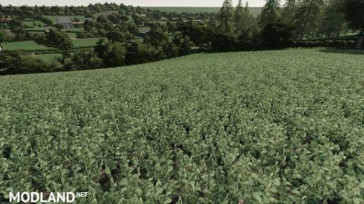 Realistic Cereal and Canola Crop Densities v 1.0, 3 photo